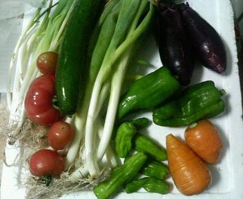 父の野菜.jpg
